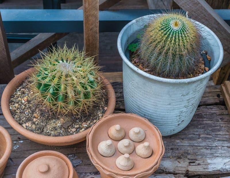 Kaktusspitzen sind in den Plastiktongefäßen sehr scharf stockbild