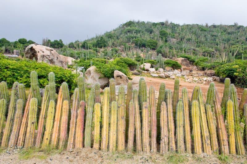 kaktusstaket royaltyfria foton