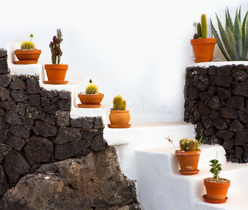 KaktusTongefäße in Lanzarote über weißen Treppen lizenzfreie stockfotografie