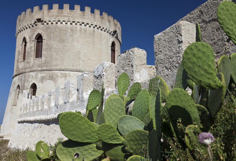 kaktustorn arkivfoton