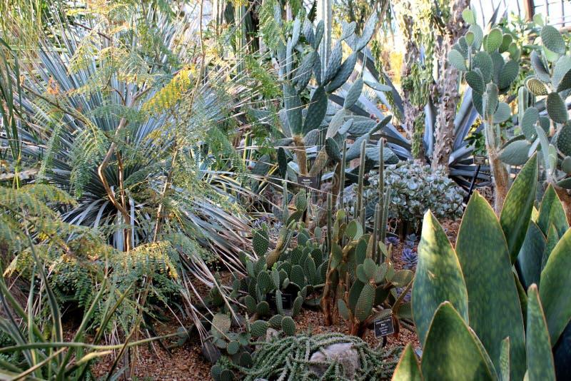 Kaktusträdgård royaltyfria foton
