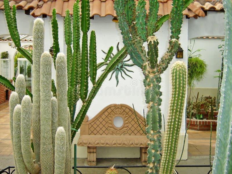 kaktusträdgård arkivfoto