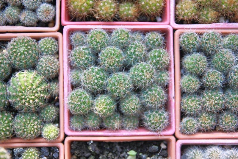 Kaktusträdgård för bästa sikt, mittfokus arkivbild