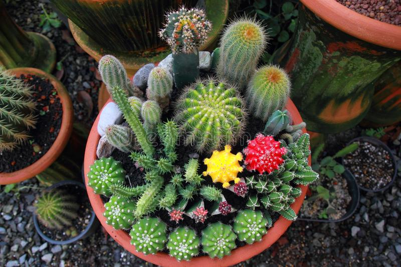 Kaktusträdgård för bästa sikt, mittfokus arkivfoto