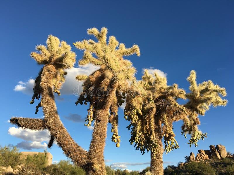 Kaktusträdgård, Joshua Tree National Park arkivbild