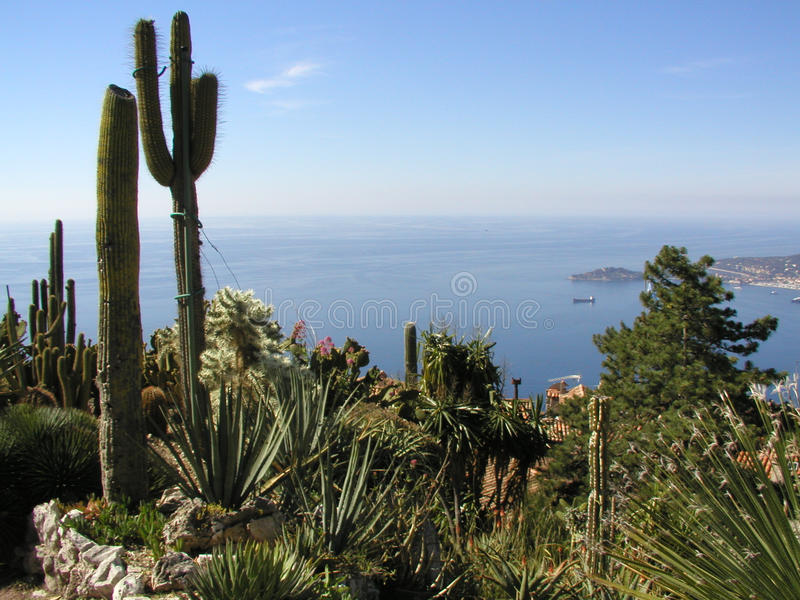 Kaktusträdgård- och havssikt royaltyfri foto