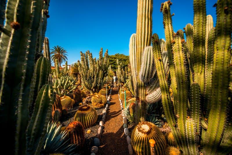 Kaktusträdgård på den Gran Canaria ön arkivbild