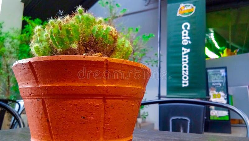 Kaktusträdgräsplan royaltyfri fotografi