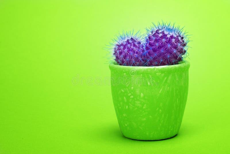Kaktusultraviolet Art Fashion Design Kakturs i för sommarstilleben för grön keramisk kruka minsta begrepp Moderiktig ljus färg arkivbild