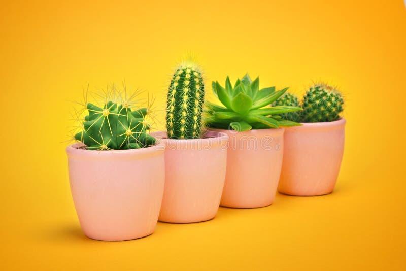 Kaktusuppsättning i keramisk krukamodedesign För sommarstilleben för kakturs minsta begrepp Grönt lynne på pastellfärgad orange b royaltyfri bild