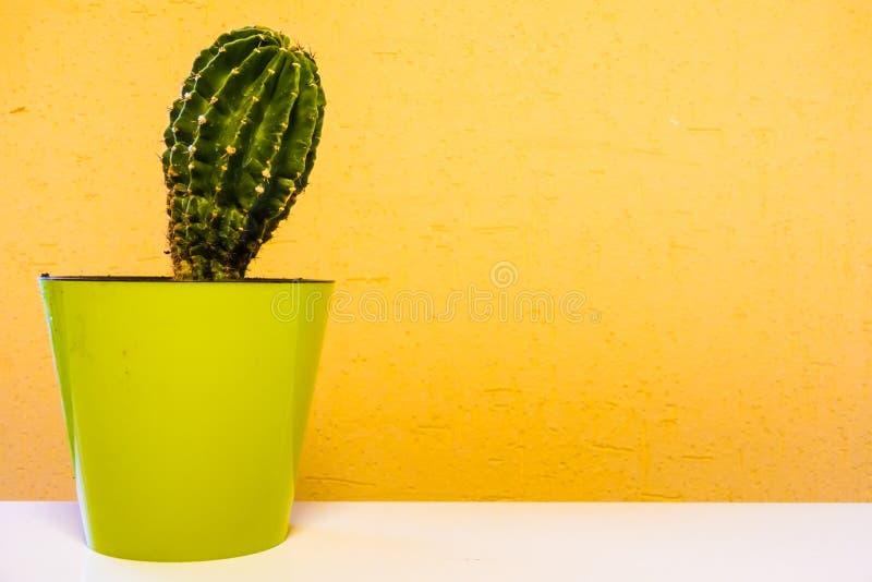 Kaktusväxt i grön kruka Inlagd kaktushusväxt på grön hylla mot den pastellfärgade senapsgula kulöra väggen royaltyfria foton