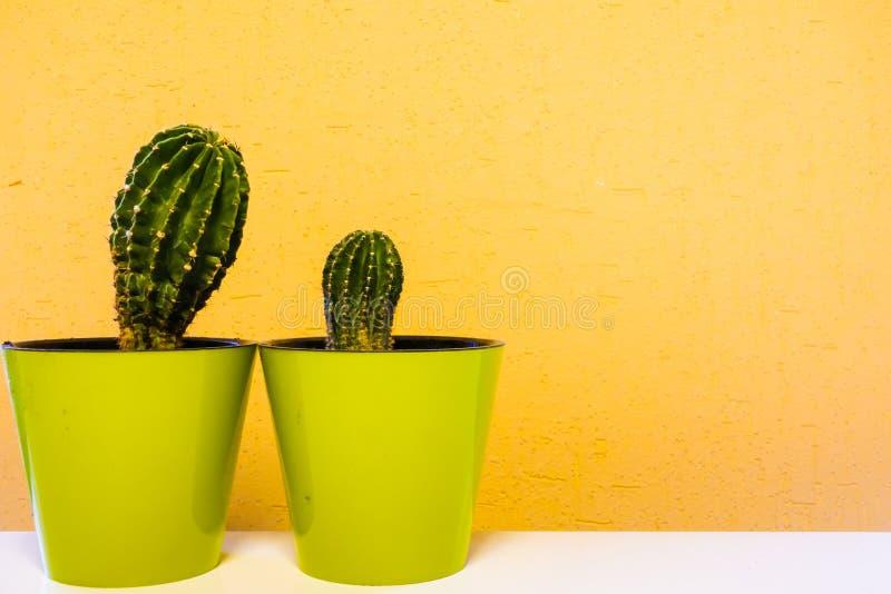 Kaktusväxt i grön kruka Inlagd kaktushusväxt på grön hylla mot den pastellfärgade senapsgula kulöra väggen fotografering för bildbyråer