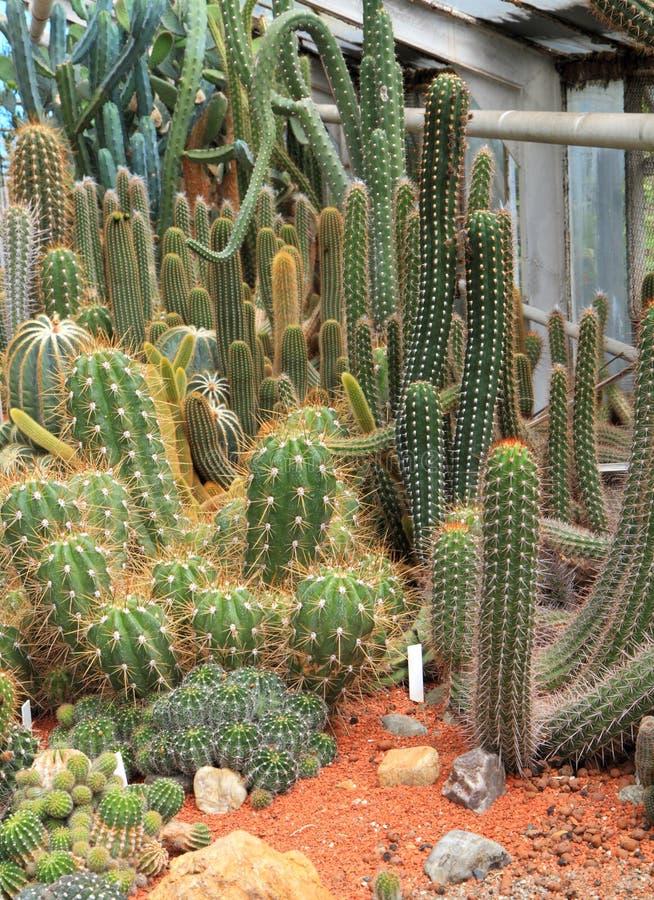 kaktusväxthus royaltyfria bilder