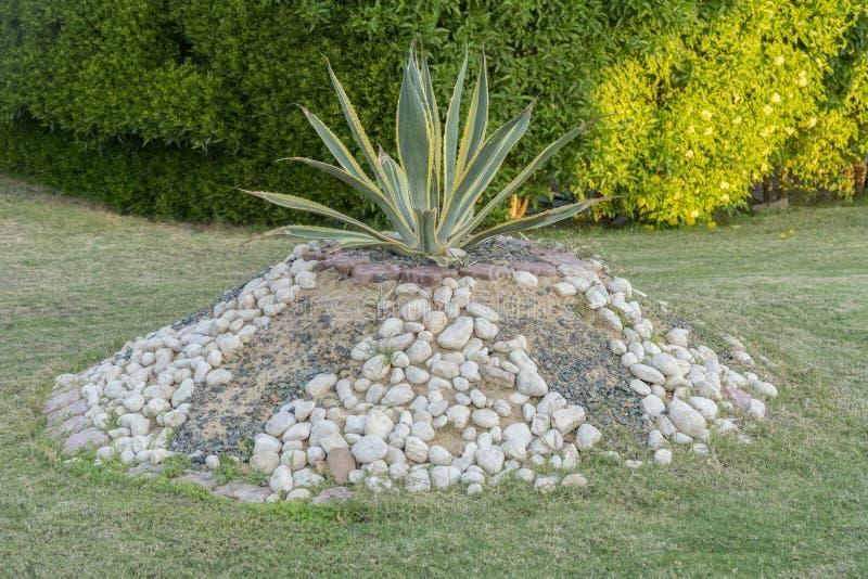 kaktusväxtrabatt Rabatt med kaktuns royaltyfri bild