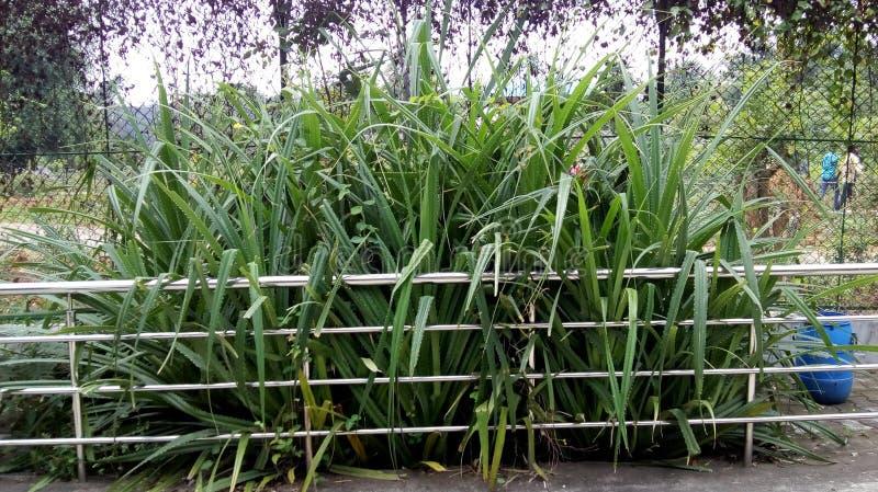 Kaktusvielzahl lizenzfreie stockfotografie