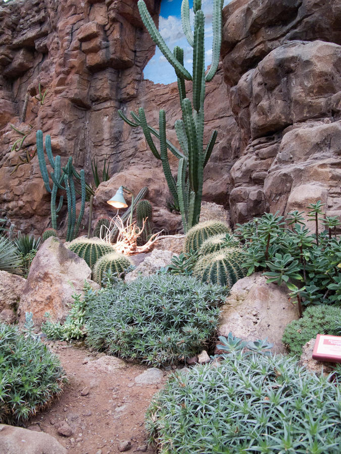 Kaktuswüste lizenzfreies stockbild