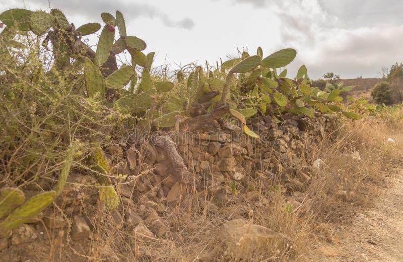 Kaktusy po drodze zdjęcie stock