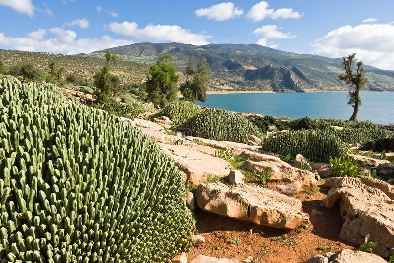 Kaktusy przy Jeziornym zapora koszem El Ouidane, Maroko obrazy stock