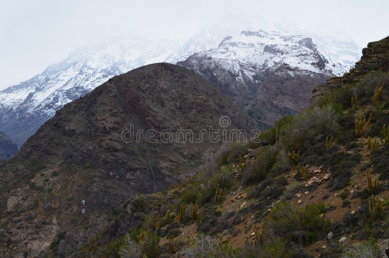 Kaktusy w RÃo Blanco Krajowej rezerwie, środkowy Chile, wysoka różnorodności biologicznej dolina w Los Andes zdjęcia stock