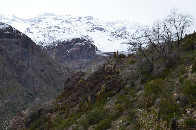 Kaktusy w RÃo Blanco Krajowej rezerwie, środkowy Chile, wysoka różnorodności biologicznej dolina w Los Andes fotografia stock