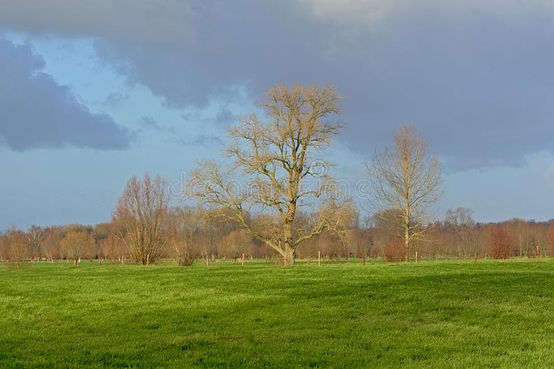 Kal ekollon och pilar i en grön äng i den flemish bygden royaltyfria bilder