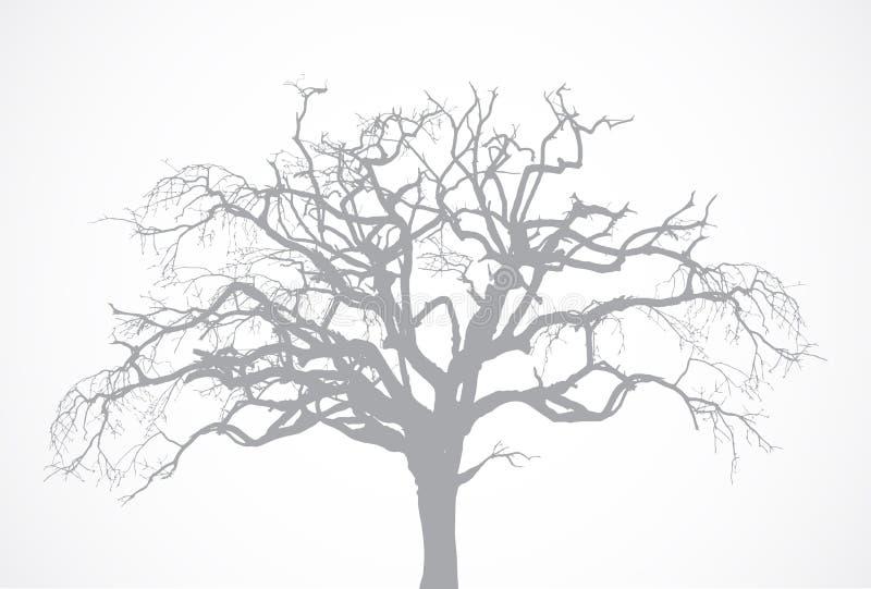 Kal gammal torr död trädkontur för vektor utan l royaltyfri illustrationer