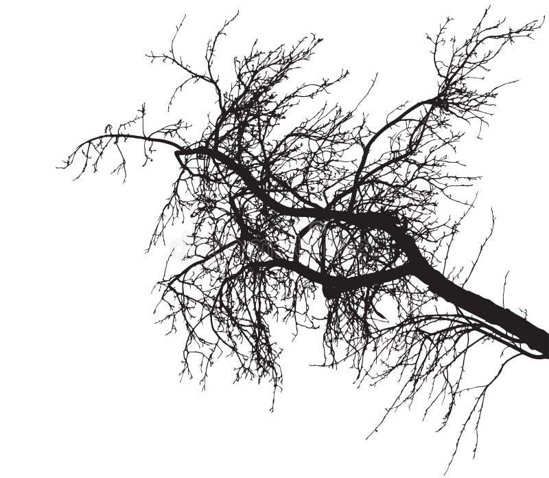 Kal kontur för trädfilial på vit bakgrund Trädfilial utan lövverk ocks? vektor f?r coreldrawillustration vektor illustrationer