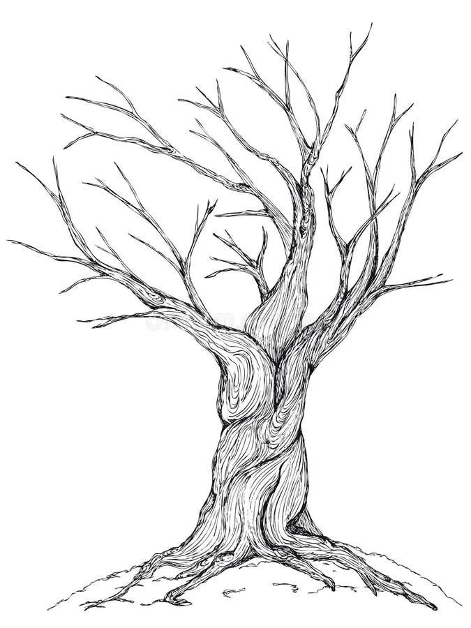 Kal trädillustration stock illustrationer