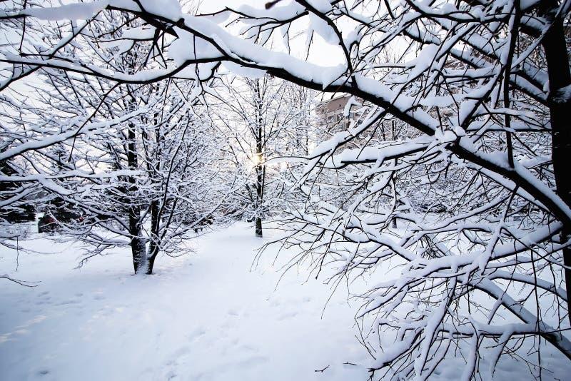 Kal under-snö för vinterträd royaltyfri foto