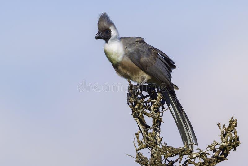 Kal-vänt mot går-bort den sätta sig fågeln royaltyfria foton