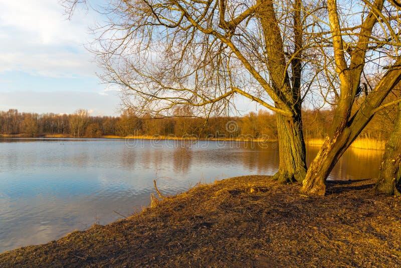 Kala träd på bankerna av spegeln slätar sjön royaltyfri bild