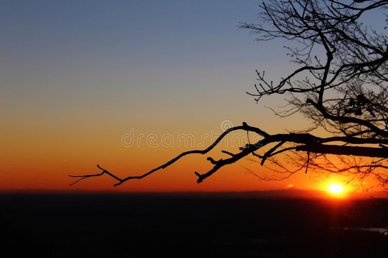 Kala trädfilialer och horisont framme av solen royaltyfri fotografi