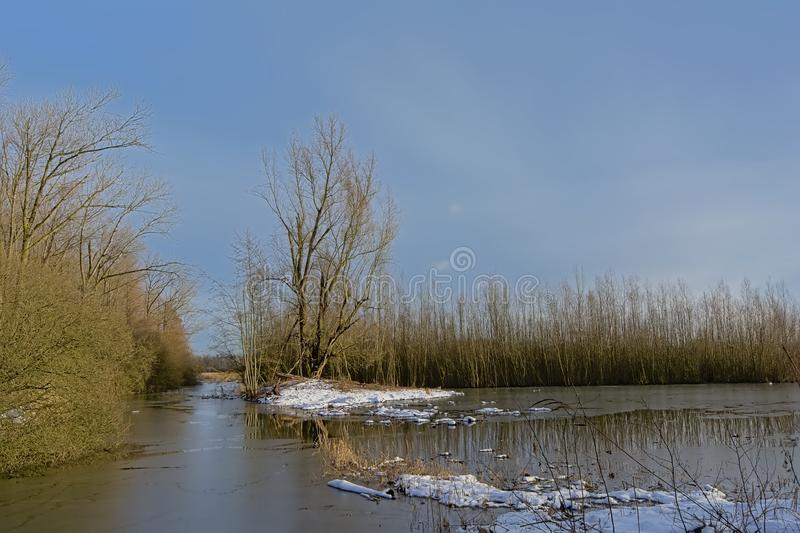 Kala vinterträd och buskar med snö längs en hal djupfryst pöl royaltyfria foton