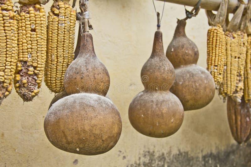 Kalabasy i kukurudze zdjęcie stock