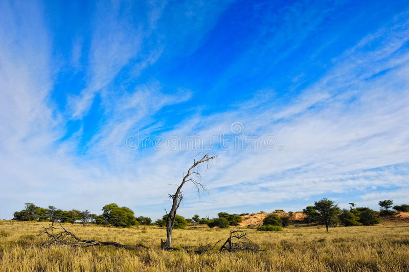 The Kalahari (Botswana). The Kalahari Desert is a large arid to semi-arid sandy area in Southern Africa covering much of Botswana and parts of Namibia and South royalty free stock photos