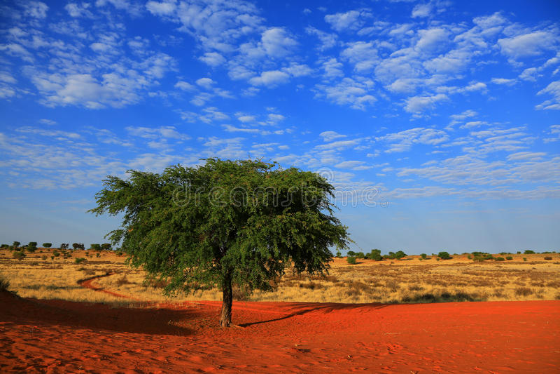 Download Kalahari Desert stock photo. Image of freedom, endless - 27572766