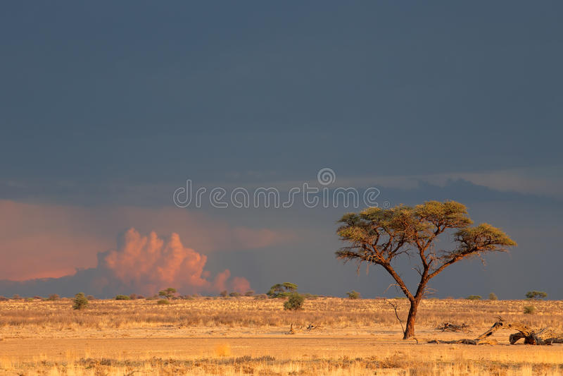 Kalahari desert landscape royalty free stock photo