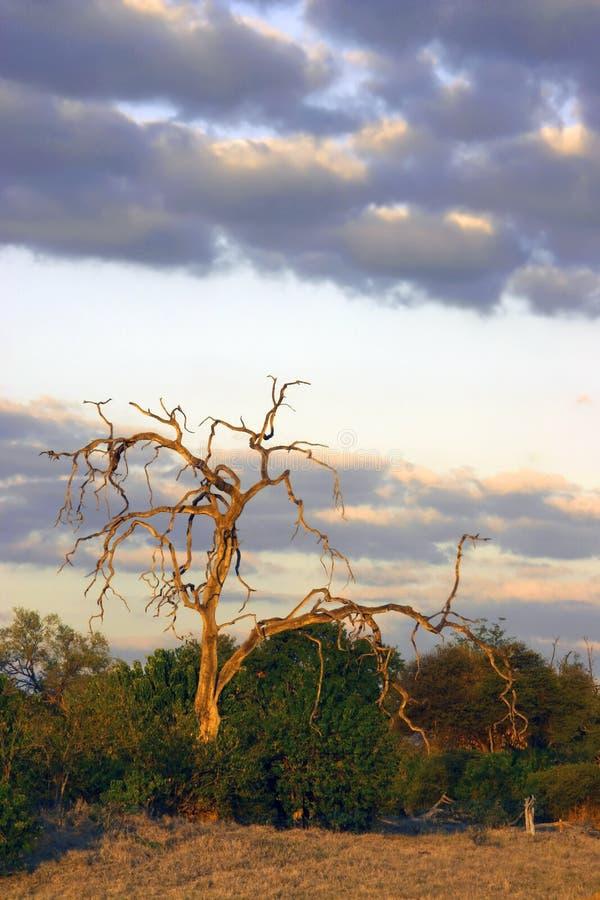 Kalahari at Dusk royalty free stock images