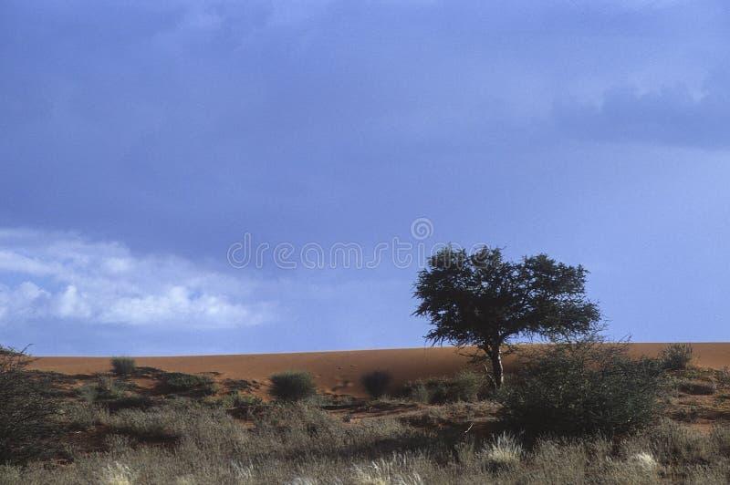 Download Kalahari pustynia zdjęcie stock. Obraz złożonej z sceneria - 65225556