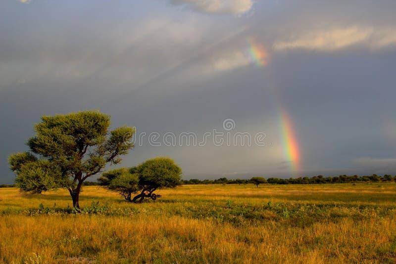 kalahari regnbågesolnedgång royaltyfria bilder