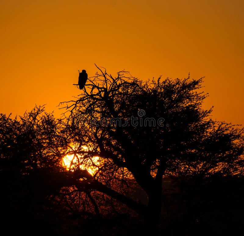 Kalahari solnedgång arkivfoto