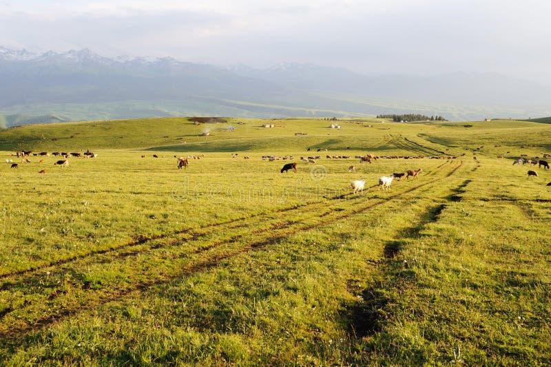 Kalajun grassland at sunset