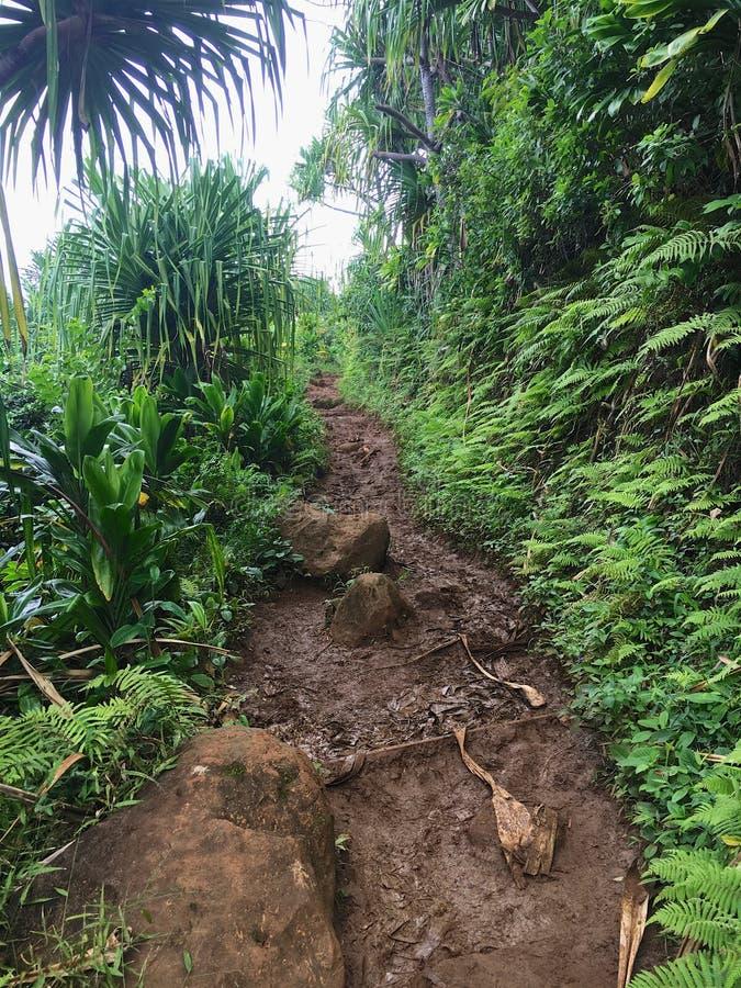 Kalalau供徒步旅行的小道 免版税图库摄影