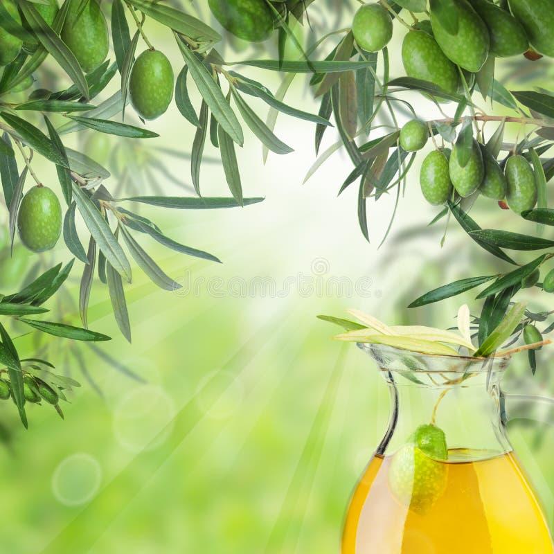 Kalamata oliwki, bokeh światło, zieleń opuszczają i oliwa z oliwek słój fotografia stock