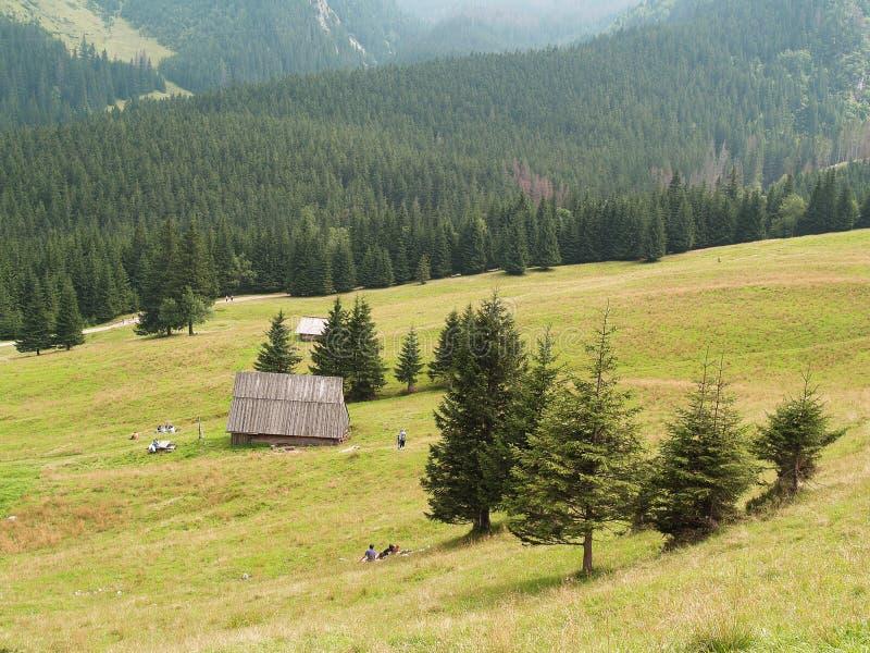 The Kalatowki valley, Zakopane, Poland. The Kalatowki in Zakopane, Poland royalty free stock image
