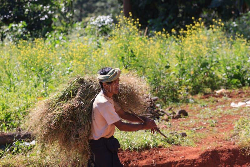 Kalaw高地,缅甸- 2019年11月18日:工作在高地的地方农夫在Kalaw和Inle湖,缅甸附近 库存图片