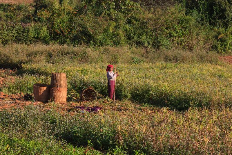 Kalaw高地,缅甸- 2019年11月18日:工作在高地的地方农夫在Kalaw和Inle湖,缅甸附近 免版税库存图片