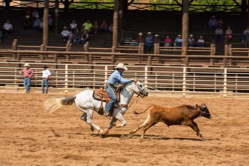 Kalb-Roping Wettbewerbs-Ballast South Dakota lizenzfreie stockfotografie