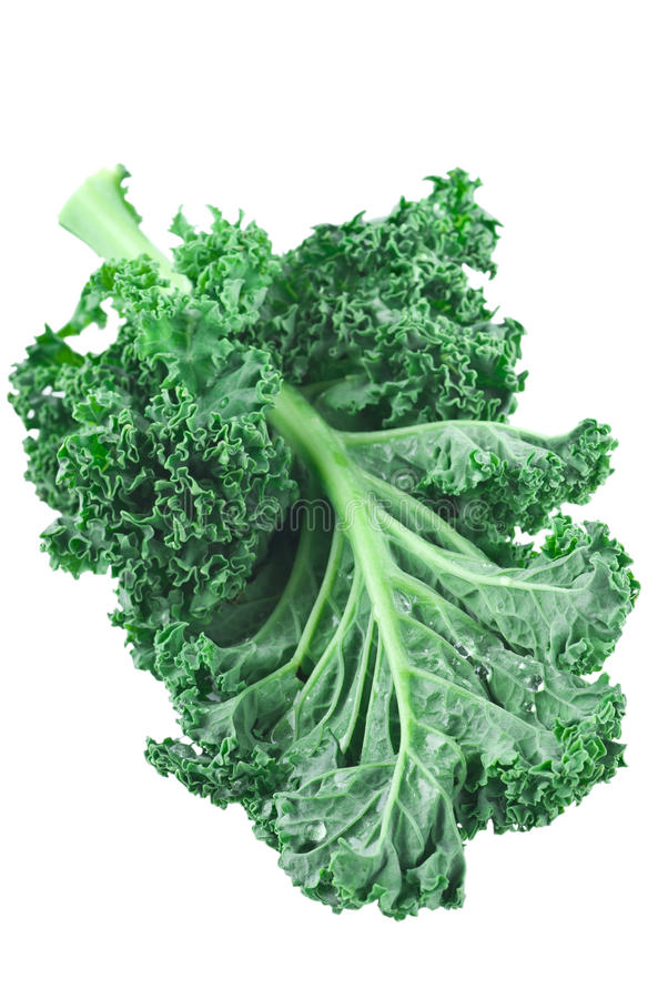 Kale royalty free stock photography