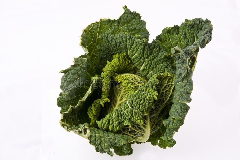 Kale royaltyfri fotografi